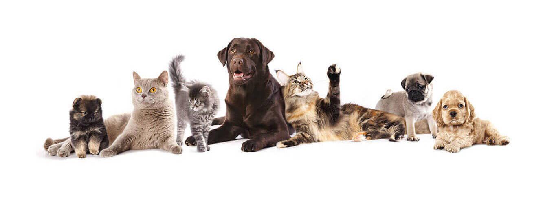 De Kweb Meute Waspik - Honden en Katten pension